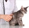 Ветеринарные клиники в Серове